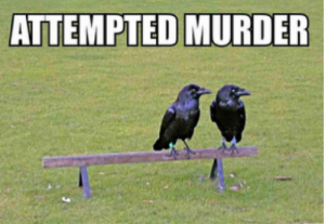 Attempted-Murder-500x346