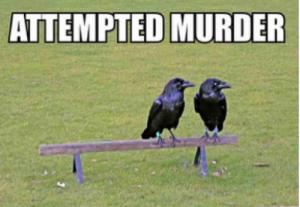 Attempted-Murder-500x346