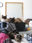 The place was messier than usual toward the end, but the kitties didn't seem to mind