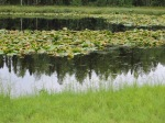 A close-up of the pond.