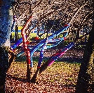 Someone yarn-bombed a tree (Anchorage)