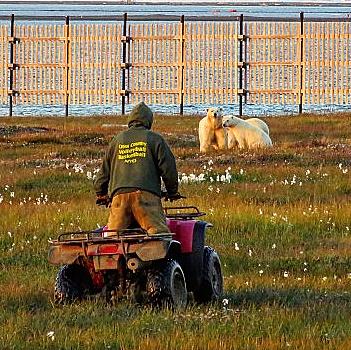 Bear patrol springs into action! (Kaktovik, Barter Island)