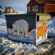 Dumpster Fauna (Barrow)