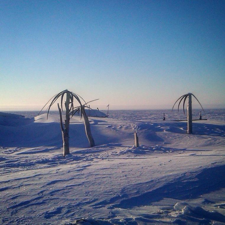 Arctic Palm Trees (Barrow)