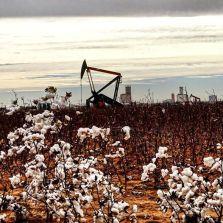 Oil & Cotton