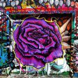 A violet Rose?