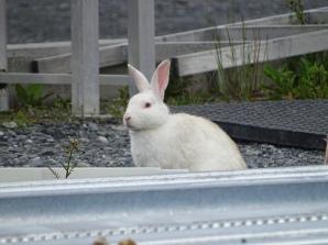 Yep, lotsa bunnies too!